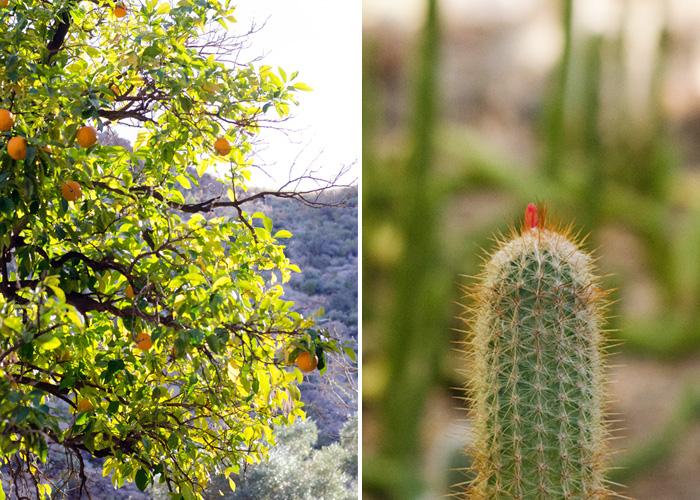Desert color at Boyce Thompson Arboretum