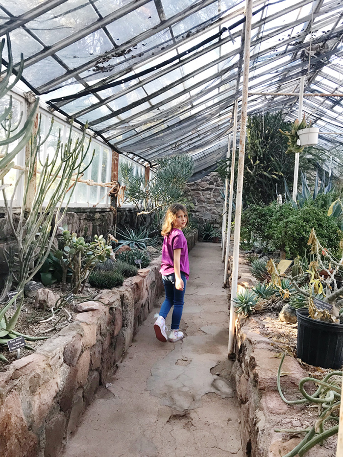 Rylie explores the cactus in the Boyce Thompson greenhouse